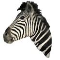 Zebra Head Sticker icon