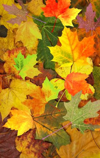 [Shake]秋の落ち葉のライブ背景