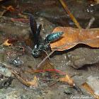 Carton Wasp
