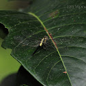 Leaf Lover dragonfly