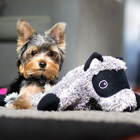 diego! by Christopher Wu - Animals - Dogs Puppies (  )