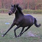Horse - Pony Wallpaper icon