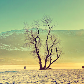 Mist by Inna Cleanbergen - Landscapes Weather ( hordaland, weather, places, landscape, norway )