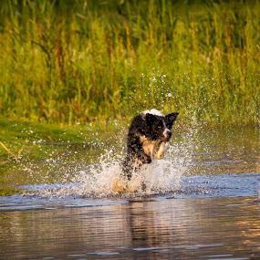 Good Fun by Malan Lombard - Animals - Dogs Playing