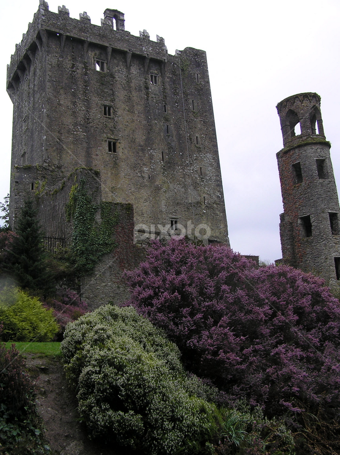 by Donna Sepe - Buildings & Architecture Architectural Detail ( ireland, irish castle, stone, castle, flowers,  )