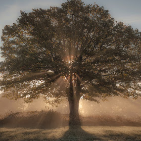 Trees in backlight by Allan Wallberg - Nature Up Close Trees & Bushes (  )