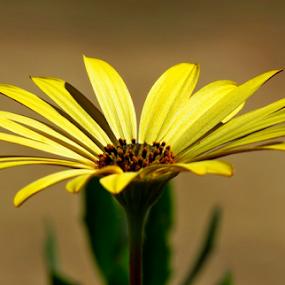 by Carola De Jager - Flowers Single Flower