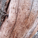 Marks on a tree