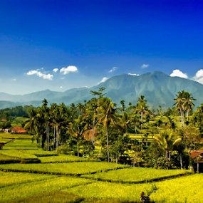 Paddy Field of Subang by Erry Subhan - Landscapes Mountains & Hills