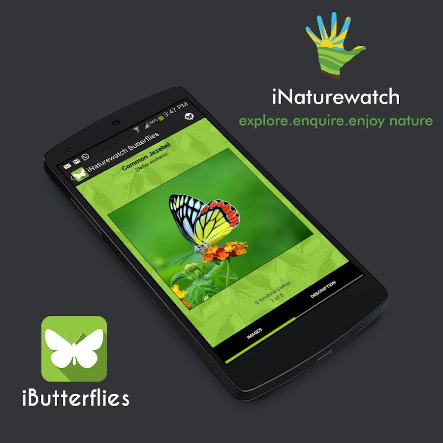 iButterflies- screenshot