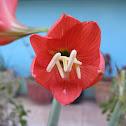 Loud speaker lily