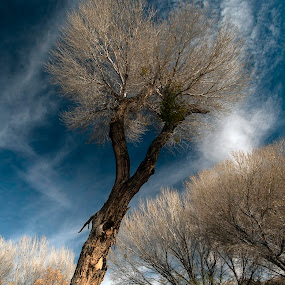 by Larry Rogers - Nature Up Close Trees & Bushes