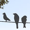 Fågelgåtan icon