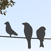Fågelgåtan