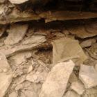 Brown Wolf Spider