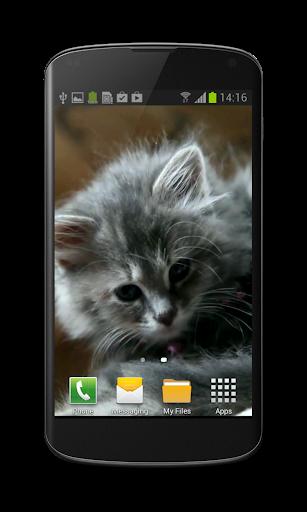 Cute Kitty Video Wallpaper