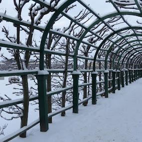Walking in Peterhof - St. Petersburg by Francesco Altamura - City,  Street & Park  City Parks ( walking, winter, snow, parks, white, silence, trees, relaxation, women, tunnel )