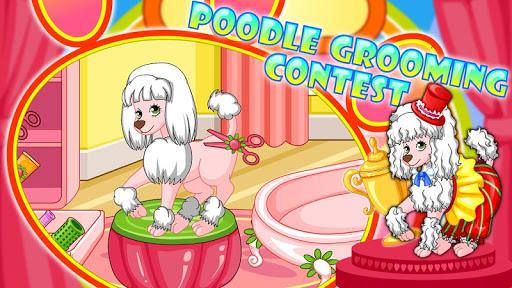 Poodle Beauty Contest