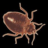 Bed Bug Scanner Prank