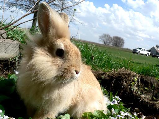 ウサギの壁紙|玩個人化App免費|玩APPs