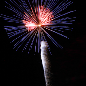 Palm Tree At Night by Dave Dabour - Public Holidays July 4th ( old towne festival, fireworks, 2011, fire, new year, dipawali, diwali, 2014,  )