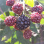 Berries by Aleksa Stankovic - Nature Up Close Other Natural Objects ( flower )