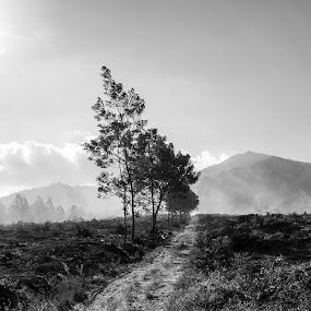 road forest by Nur Saputra - Landscapes Forests
