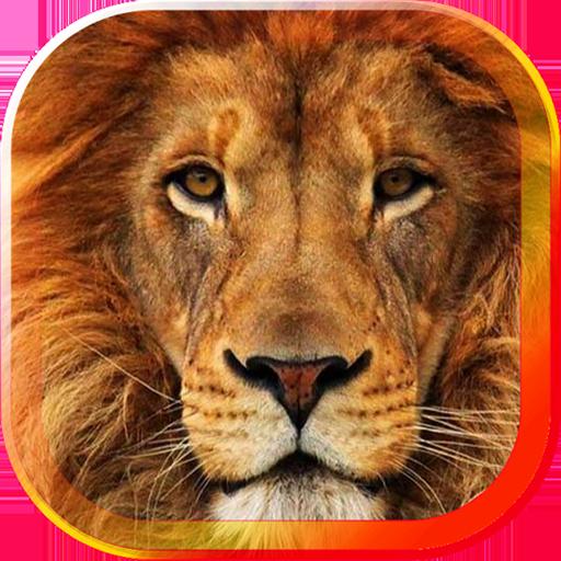 Lions Sounds HD live wallpaper LOGO-APP點子