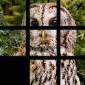 PicFuz Pro: Rompecabezas Fotos icon