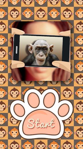 What monkey am I