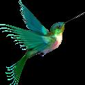 Uccello Sfondo Animato icon
