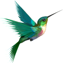 Bird Live Wallpaper icon