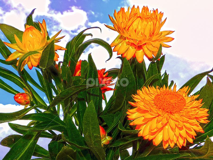 yellow flowers by LADOCKi Elvira - Flowers Flower Gardens ( nature, 2014, plants, flowers, garden )