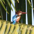Birds of Western Ghats