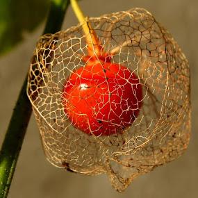 by Renata Kučan - Nature Up Close Other plants