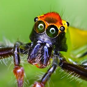 HALLO WORLD ... by Ahmad Zaini - Animals Insects & Spiders