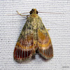 Pyralidae, Epipaschiinae