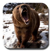 Brown Bear Live Wallpaper