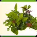 Herbs 101 logo
