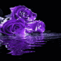 Purple Roses Live Wallpaper icon