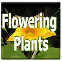 Flowering Plants Manual logo