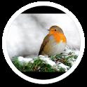 Winter Birds Snowfall LWP icon