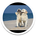 Lovely Dog Live Wallpaper icon