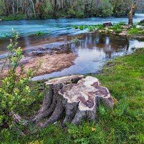 Santa Isabel by Jose María Gómez Brocos - Landscapes Waterscapes ( water, field, trunk, flowers, landscape, river )