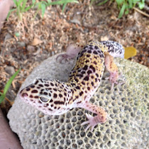 Reptiles and Amphibians of the Northern Philippines