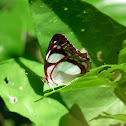 Butterfly - Mariposa