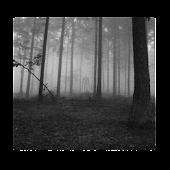 Slenderman's Forest LW Free
