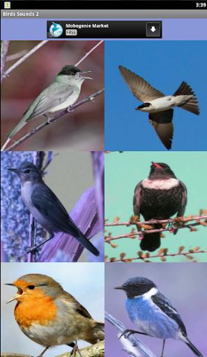 Birds Sounds 2 اصوات الطيور