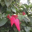 Nusa indah