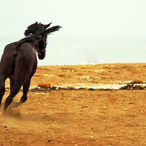 Born Free by Seema Nair - Animals Horses ( free, horse, black horse, black, animal,  )